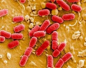 alemania-bacteria