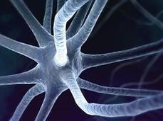 neuronamotora