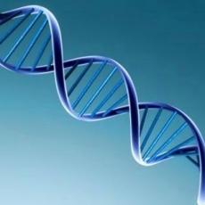 Genoma-Humano_230x230