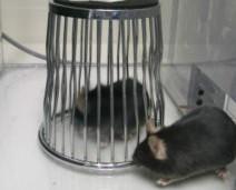 prueba en ratones