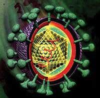 20080205_mgb_Hepatitis_