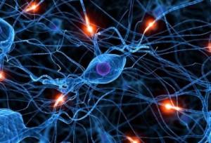 proteina-cerebro