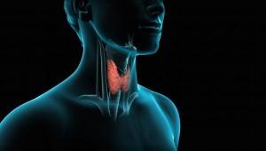 tiroides-300x170