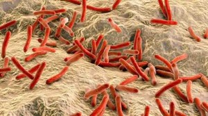 leprabacteria