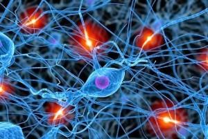 neuronas-sinapsis