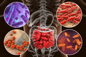 bacteria-intestinal-300x200