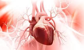 corazon-proteinas