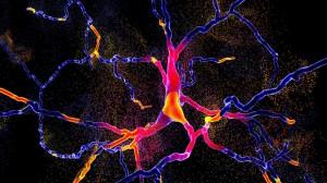 parkinson_neuronas