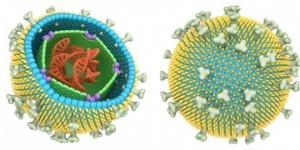 virusmononucleosis