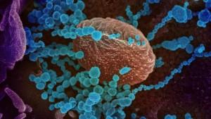 coronavirus-camuflaje