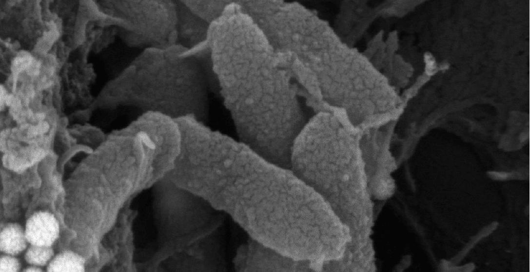 bacterias-o