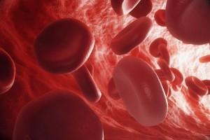 sangre-alta-300x200