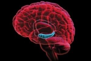 hipocampo-cerebro-640x360